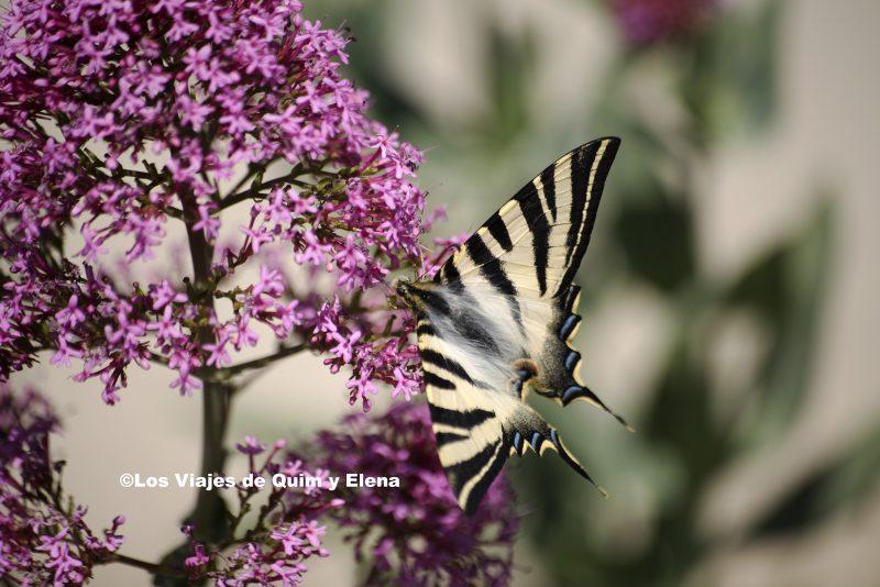 Mariposa en el Park Güell